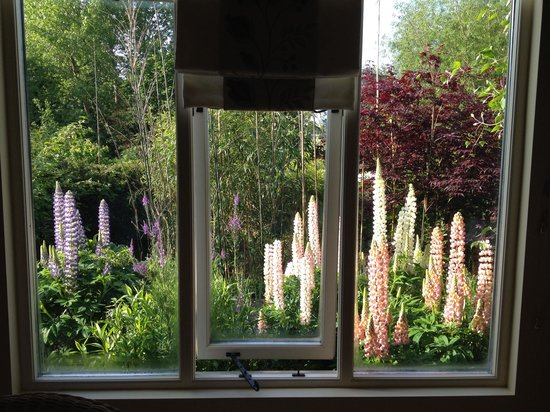 The Steppes Bed & Breakfast: The view from the Red Room