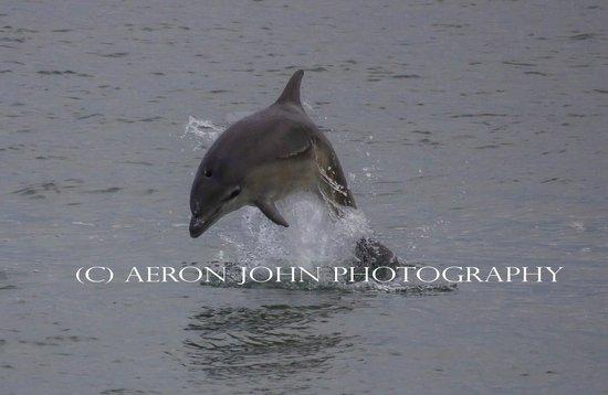 Pembrokeshire Photo Walks: Bottlenose dolphin