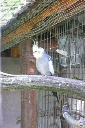 La Ferme aux Oiseaux Exotiques: Oiseaux