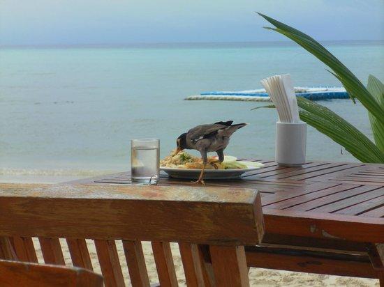 Arayaburi Resort - Phi Phi Island: Pequeno Almoço