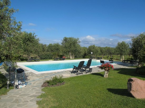 Rosso di Sera : Beautiful pool with olive trees in the background