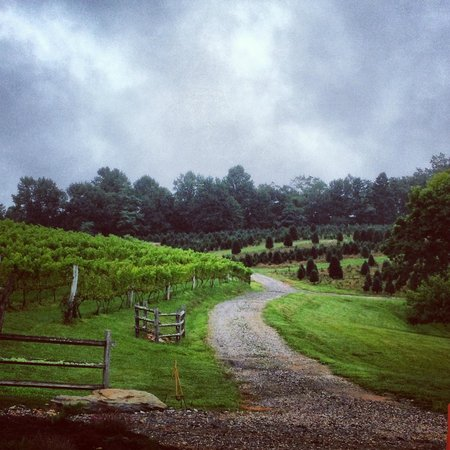 Linville Falls Winery : Linville Falls Vineyard