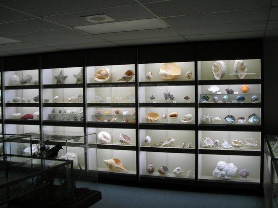 Stones 'n Bones Museum : Part of collection