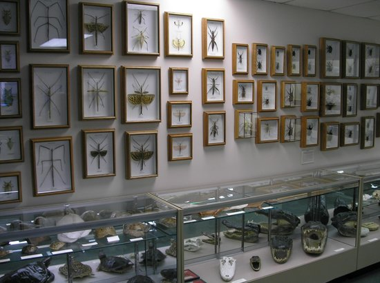 Stones 'n Bones Museum: Part of collection