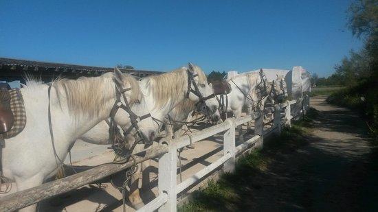 L'Auberge Cavaliere Du Pont Des Bannes: chevaux
