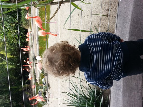 San Diego Zoo: Flamingos and grandson loves them