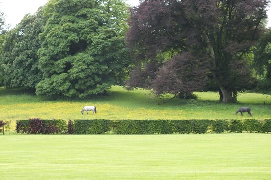 Bloomfield House Hotel, Leisure Club & Spa : view