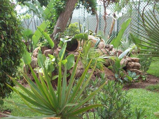 Residence Yasmina Agadir: Jardin au bord de la piscine