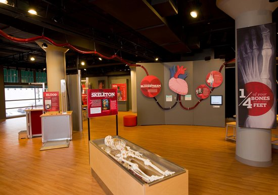 Museum Of Discovery: Amazing You Gallery