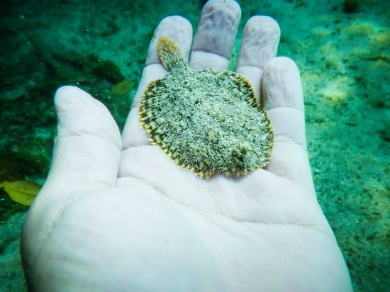 Diving Cenotes Tulum : casa cenote dive