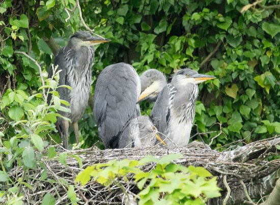 Betsie Jane River Tours: Get up close and personal on our wildlife cruises