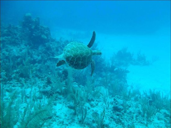 Blue Experience Diving : Turtles everywhere !