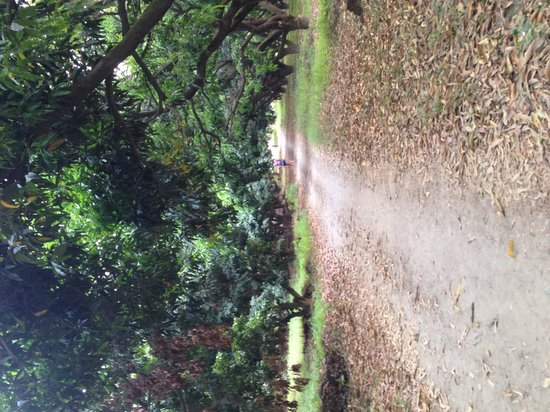 The Homestead at Corbett Country: In the litchi orchard