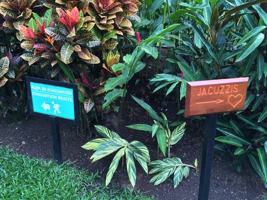 Nayara Resort Spa & Gardens: Love erruption to the right, Volcanic erruption to the left!