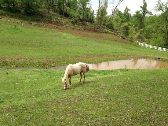 Pleasant View Farm Bed and Breakfast Inn : Horse