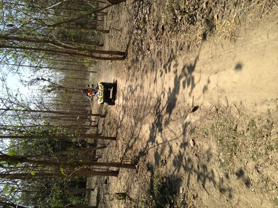 The Homestead at Corbett Country: ATV ride in the forest