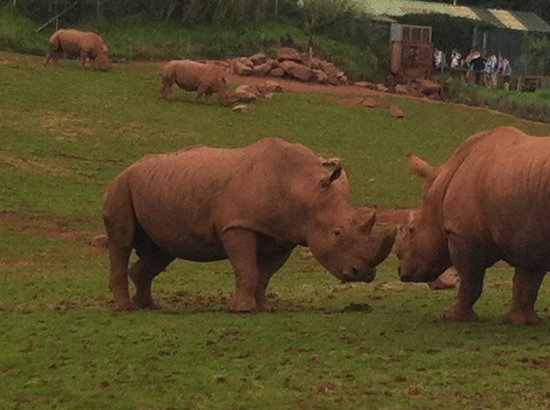 South Lakes Safari Zoo : Rhinos