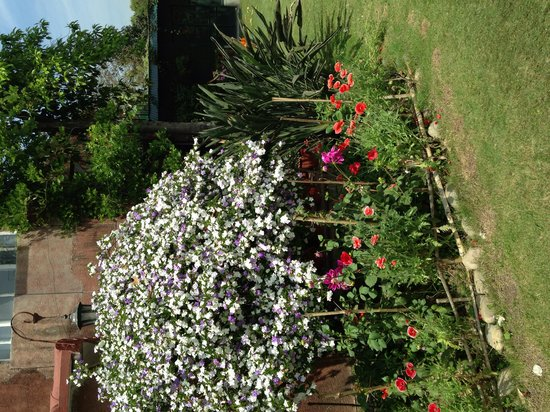 The Homestead at Corbett Country: Garden in bloom