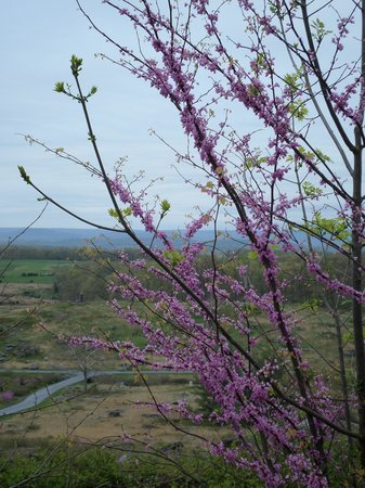 Gettysburg Museum and Visitor Center : Red BUds