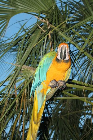 Hampton Inn Key Largo: this is mango