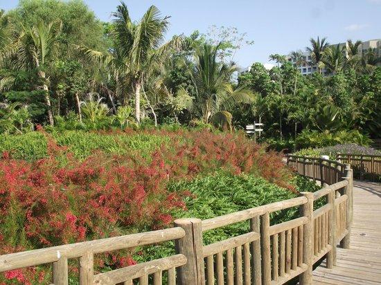 The Grand Mayan Nuevo Vallarta: the jungle