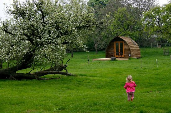 Hill Farm and Orchard Wigwams: Wigwams/Orchard