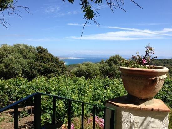 El Tesoro : Las vistas desde la terraza... lo unico bueno...