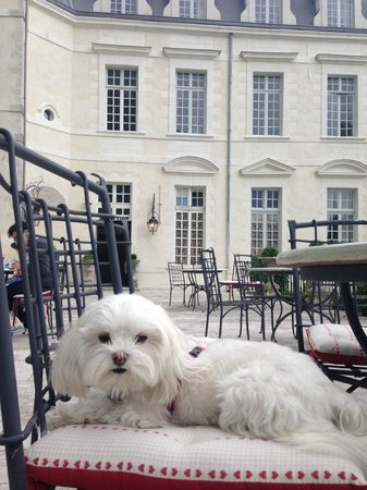 Le Grand Hotel de l'Abbaye : Terrace. And dogs allowed!
