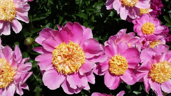 New York Botanical Garden : Beautiful flowers. .