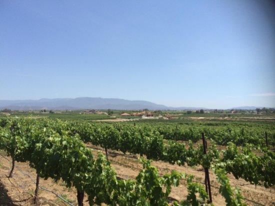 Temecula Wine Country Horseback Riding: Beautiful scenery