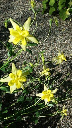 New York Botanical Garden: Love these flowers. ..