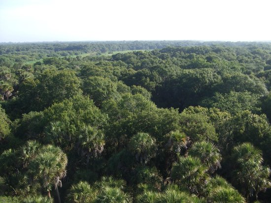 Myakka River State Park: Up on the canopy tower