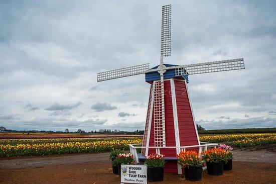 Wooden Shoe Tulip Farm : The windmill