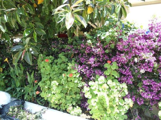 blomster ved winehouse