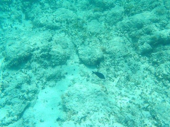 Catamaran Sailing Antigua : A fish we saw snorkeling