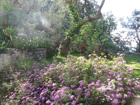 B&B Casa Augusto: Beautiful flowers all around the yard