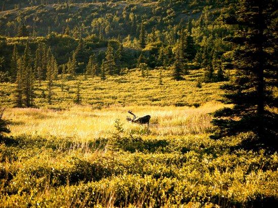Caribou foto di alaska fishing and raft adventures day for Fishing in fairbanks alaska