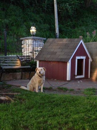 Forgotten Seasons Bed & Breakfast : Lucky, owners' dog