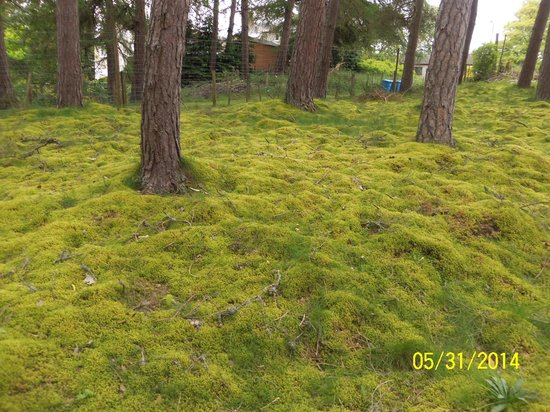 Highland Folk Museum: forested areas