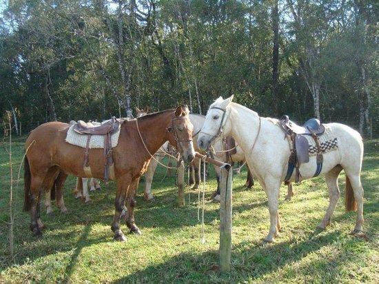 Itaytyba Ecoturismo Farm Hotel: Cavalos