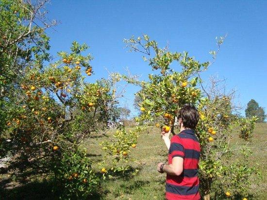 Itaytyba Ecoturismo Farm Hotel: Vegetação