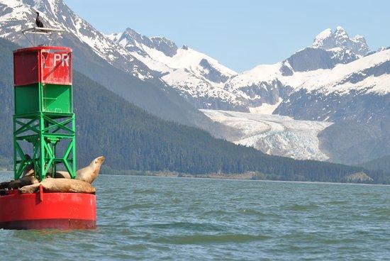 Harv and Marv's Outback Alaska: sealions