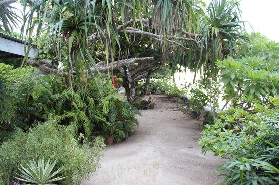 Chez Louise : Louise's garden.