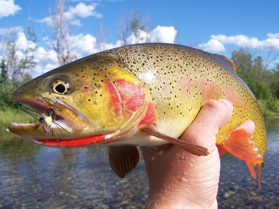 Fish The Fly Guide Service & Travel