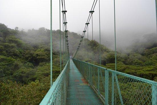 Selvatura Park: puente colgante