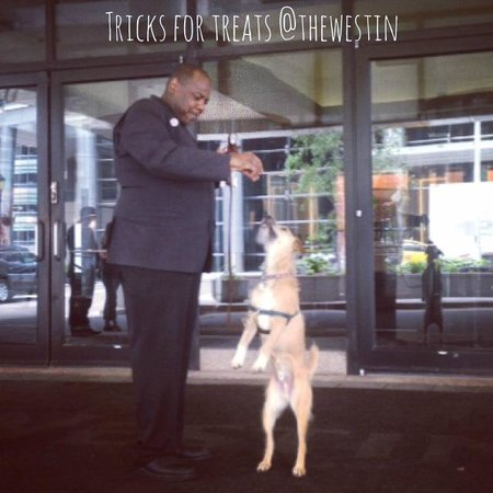 The Westin Chicago River North : Tricks for treats!
