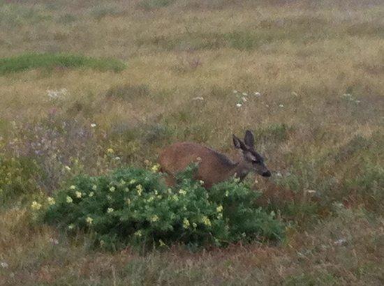 Wildlife at Bodega head