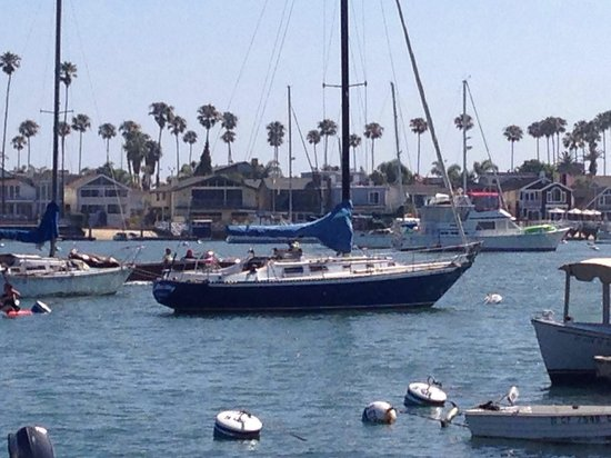 Newport Landing Whale Watching: Other boats in the ocean too