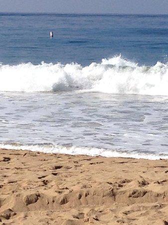 Newport Landing Whale Watching: Balboa Beach