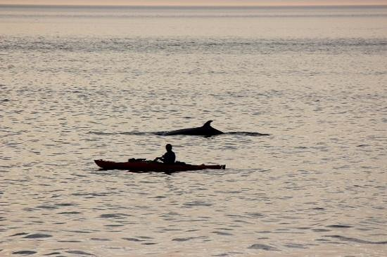 Paradis Marin : Close enough?  kayaker wasn't chasing whale, it simply surfaced next to him.